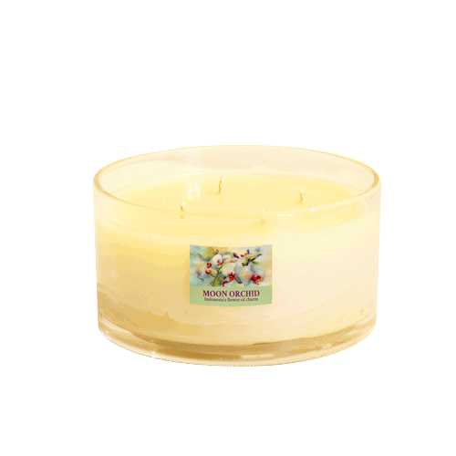 Moon Orchid Large Jar Candle