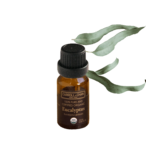 Essential Oil, Eucalyptups organic